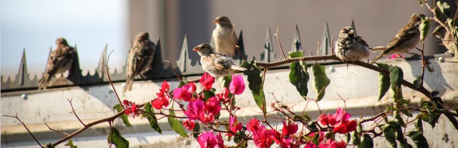 Vogelfutter Sonnenblumenkerne