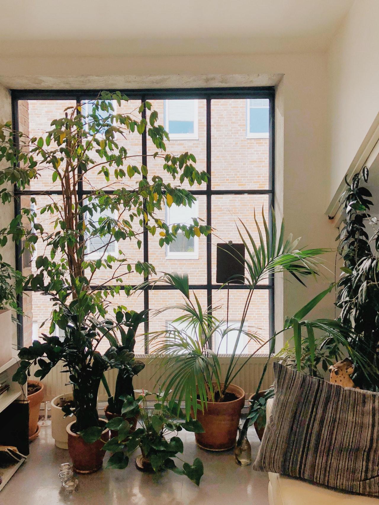 Pflanzen in Räumen